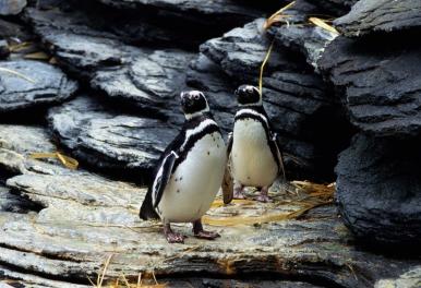リスボン水族館 ペンギン