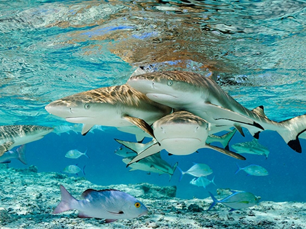 oceanário de lisboa and national geographic inaugurate sharks