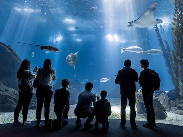 Resultado de imagem para oceanario lisboa
